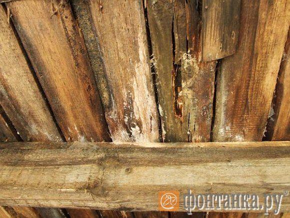 Белая плесень буквально «выедает» внутренность деревянных балок