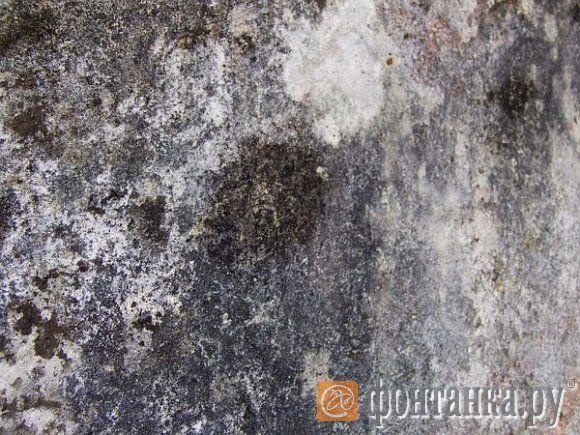 Так выглядит «вполне заплесневевший» бетон