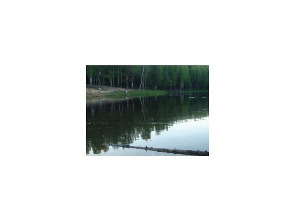 Сертоловский лес утопает в канализации