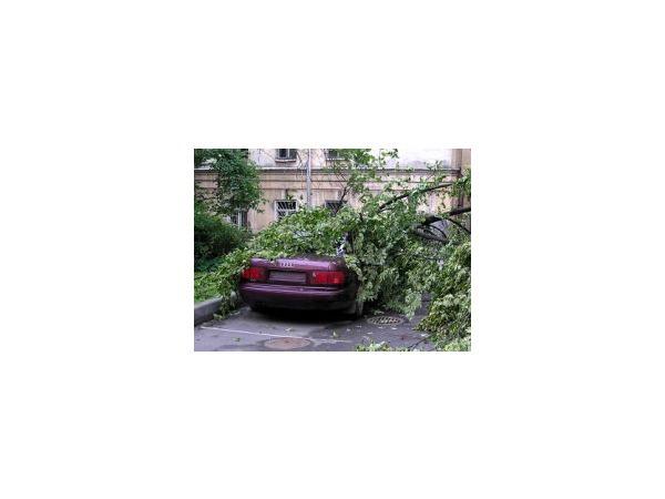Последствие ночного шторма: дерево придавило машину