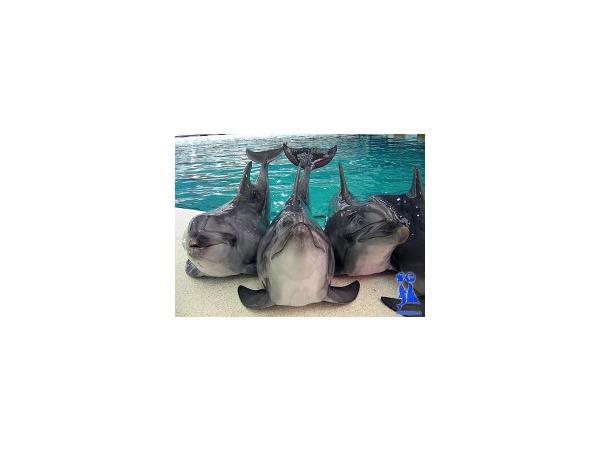 Дельфинарий под арестом