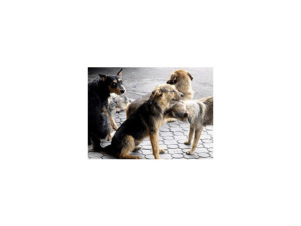 Больницу Боткина оккупировали бездомные псы