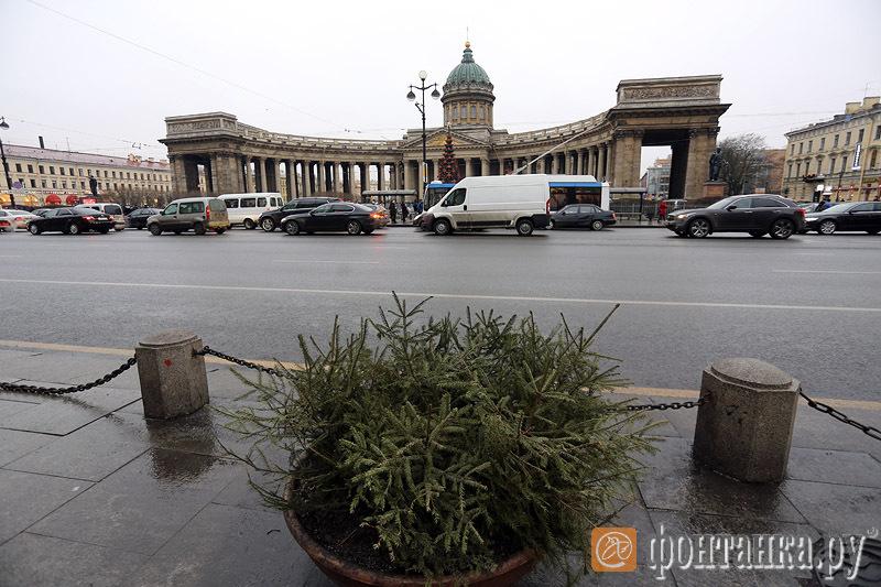 Вазоны с елками на Невском