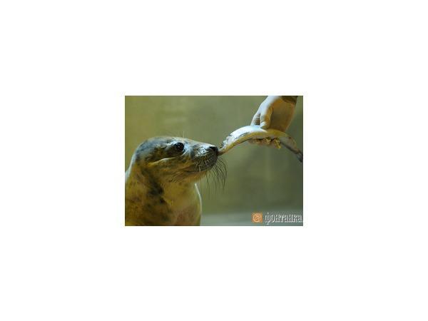 Четырём тюленям в Репино дали имена