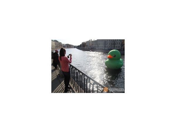 По Фонтанке плавает гигантская зеленая утка