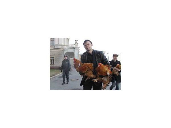 Курицам в ЗакСе не место