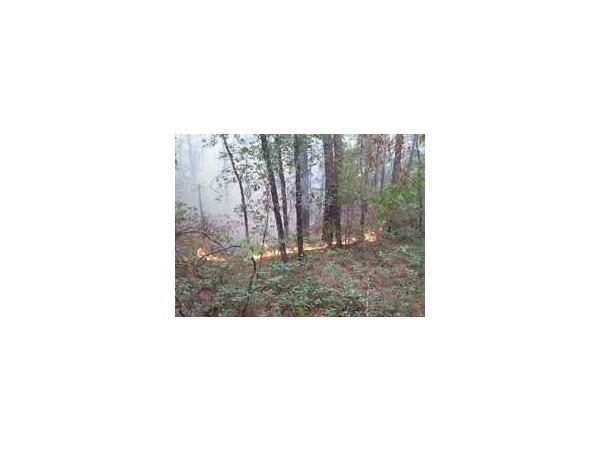 В окрестностях Геленджика тушат лесной пожар