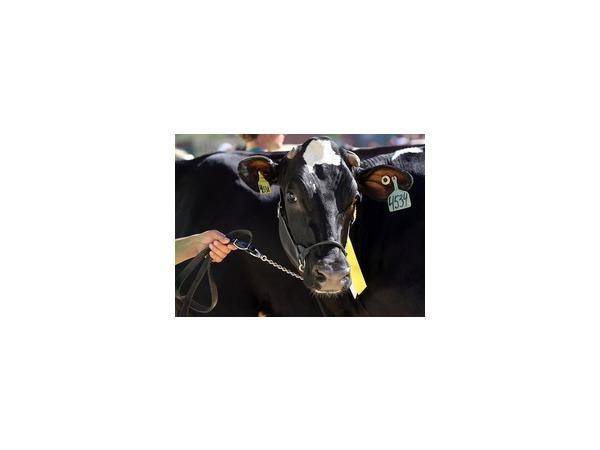 Мясной и молочной отраслям не хватает продуктового запрета
