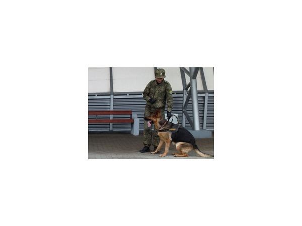 Таможенники Северо-Запада натаскивают собак на деньги