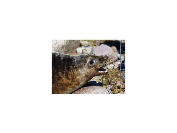 В Репино открыли детский сад для тюленят