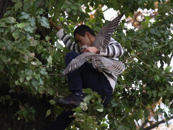 Улетевшего из Ленинградского зоопарка сокола спас прохожий