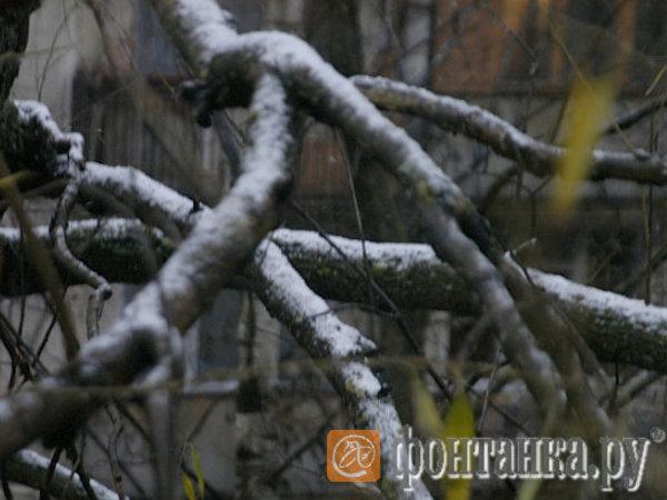 [Фонтанка.Офис]: зима близко