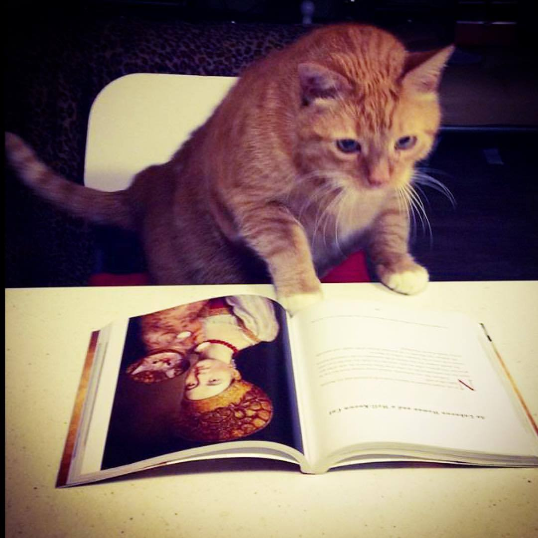 В «Республике Кошек» будут раздавать рыжих котов (Иллюстрация 1 из 1) (Фото: https://vk.com/cats_republic)