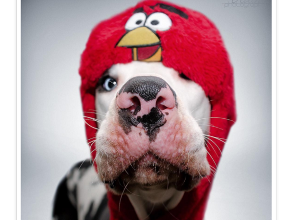 Самый нефотогеничный пёс в мире живёт в Финляндии