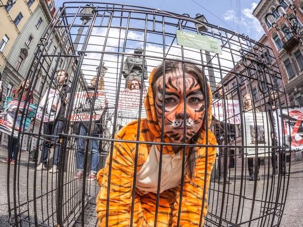 Защитники животных показали на Невском спектакль про несчастного тигра