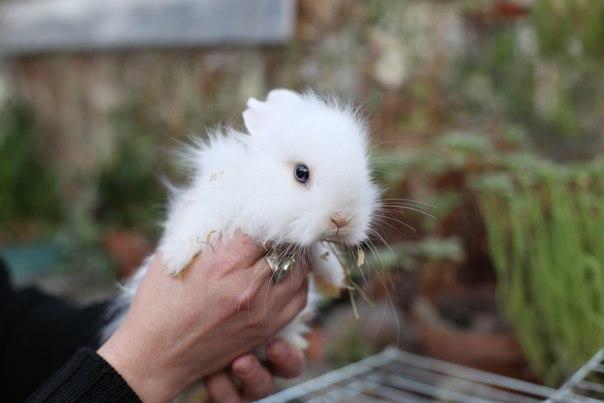 В ботаническом саду СПбГУ раздадут кроликов по конкурсу (Иллюстрация 2 из 3) (Фото: <a href=