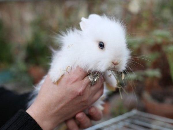 В ботаническом саду СПбГУ раздадут кроликов по конкурсу