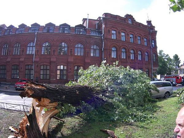 В ГУ МЧС поступило полсотни заявок об упавших деревьях