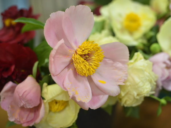 Ботанический сад приглашает проголосовать за самый красивый пион