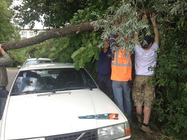В Петербурге число поваленных ветром деревьев приближается к сотне