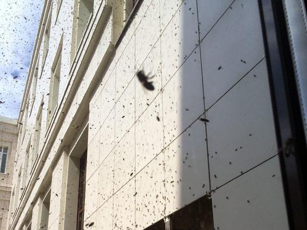 Петербургский Политех атаковали пчелы