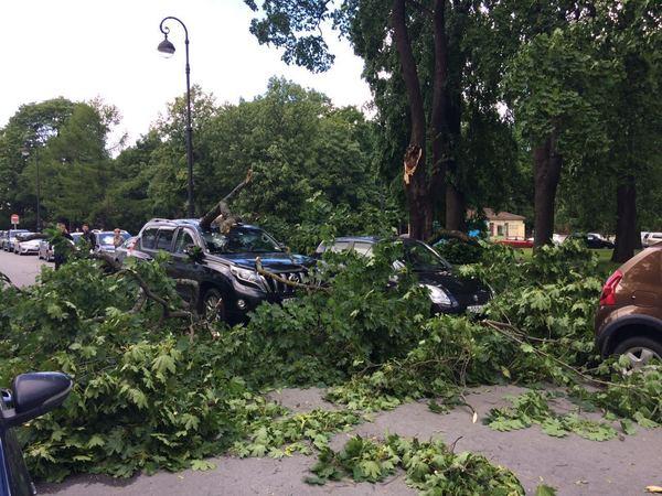 С утра в Петербурге от сильного ветра упали 14 деревьев