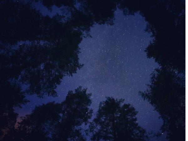 Ночью в небе над Петербургом падали звезды