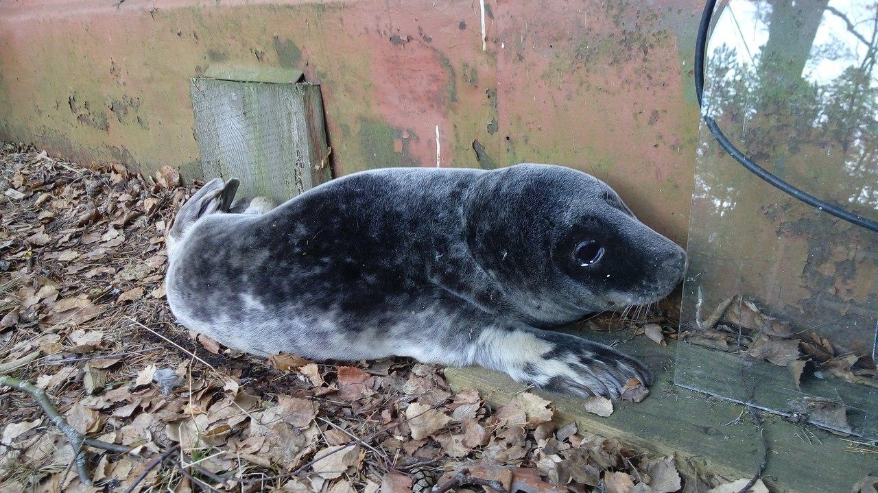 Группа VK/Спасение тюленей