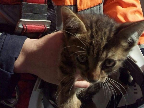 В Петербурге вызволили котёнка, застрявшего в опоре ЗСД