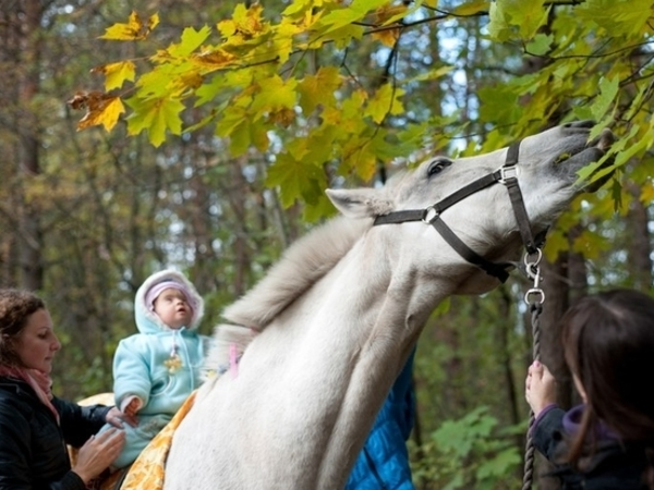 Помогите «Аккорду» остаться на коне