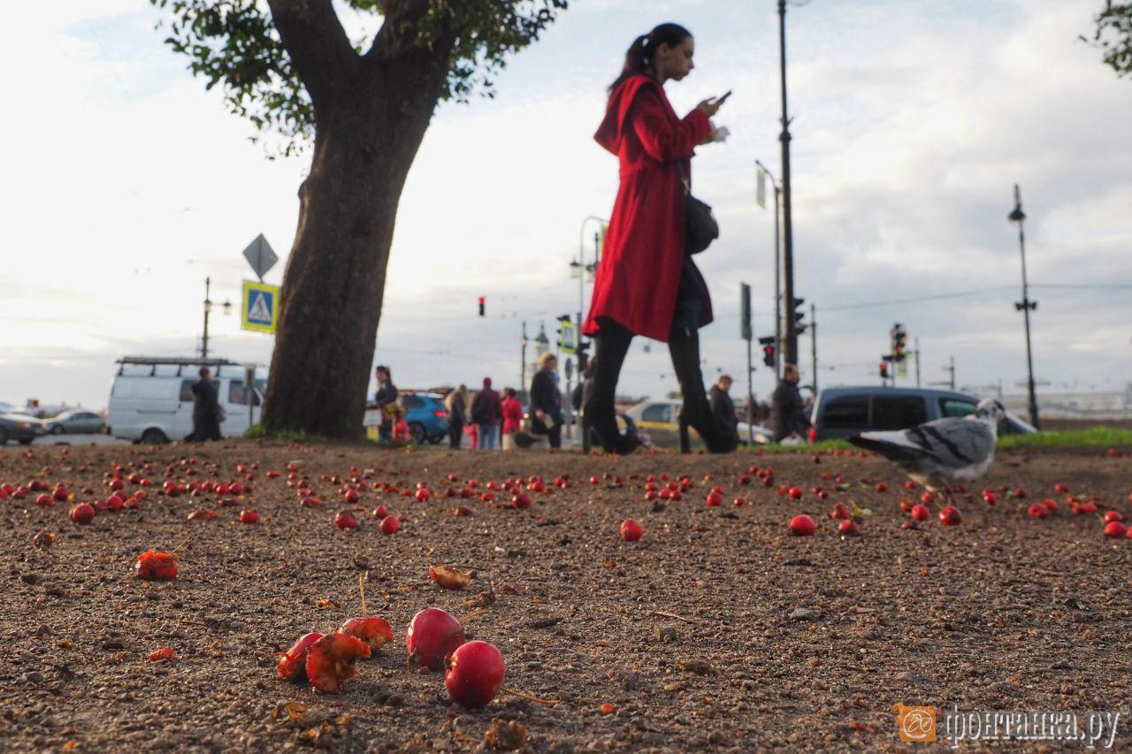 Бабье лето в Петербурге начнется в среду и продлится около недели (Иллюстрация 1 из 1) (Фото: Михаил Огнев)
