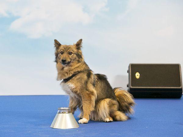 Аэрофлот зарегистрировал породную группу своих служебных собак и провел их презентацию