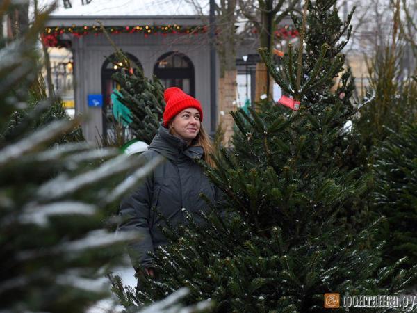 В Петербурге открываются елочные базары
