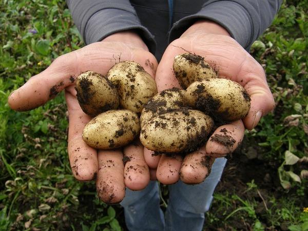Зачем ретейлеры становятся фермерами