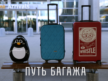 Путешествие Чемодановых: Что происходит с багажом во время авиаперелета?