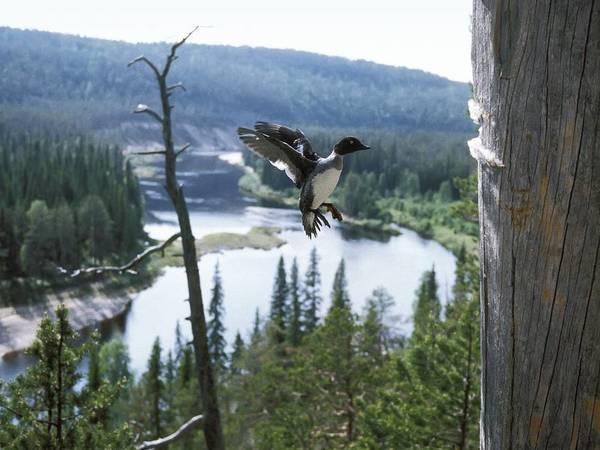 Выходные 12-13 мая: музыка, птицы и мотогонки