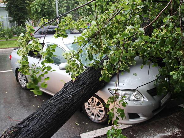 Ночной ураган оставил без света восемь тысяч человек в пригородах Петербурга