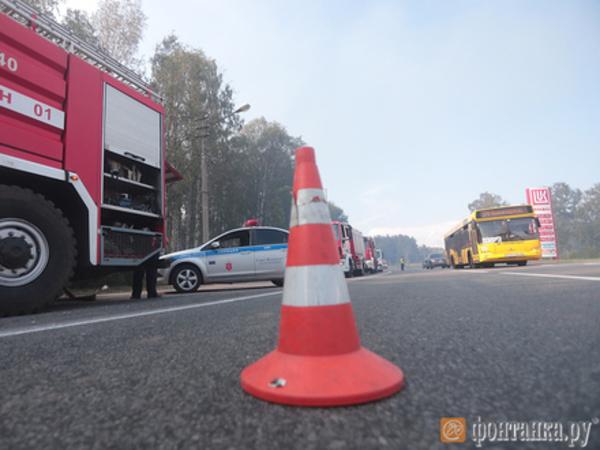 Под Сестрорецком тушат лесной пожар