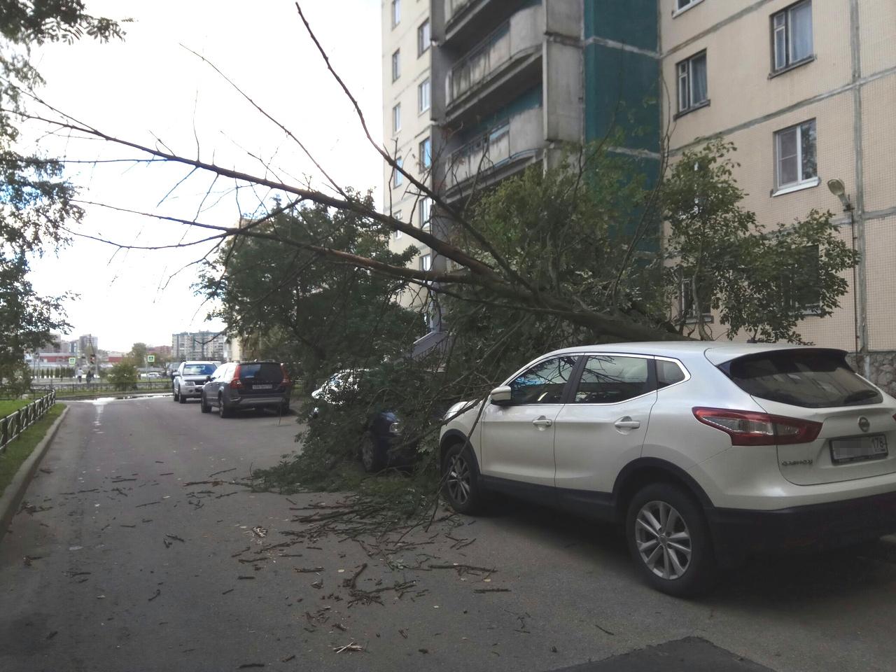 На проспекте Королёва, 34, дерево упало на «Шкоду Октавию» и «Ниссан Кашкай».