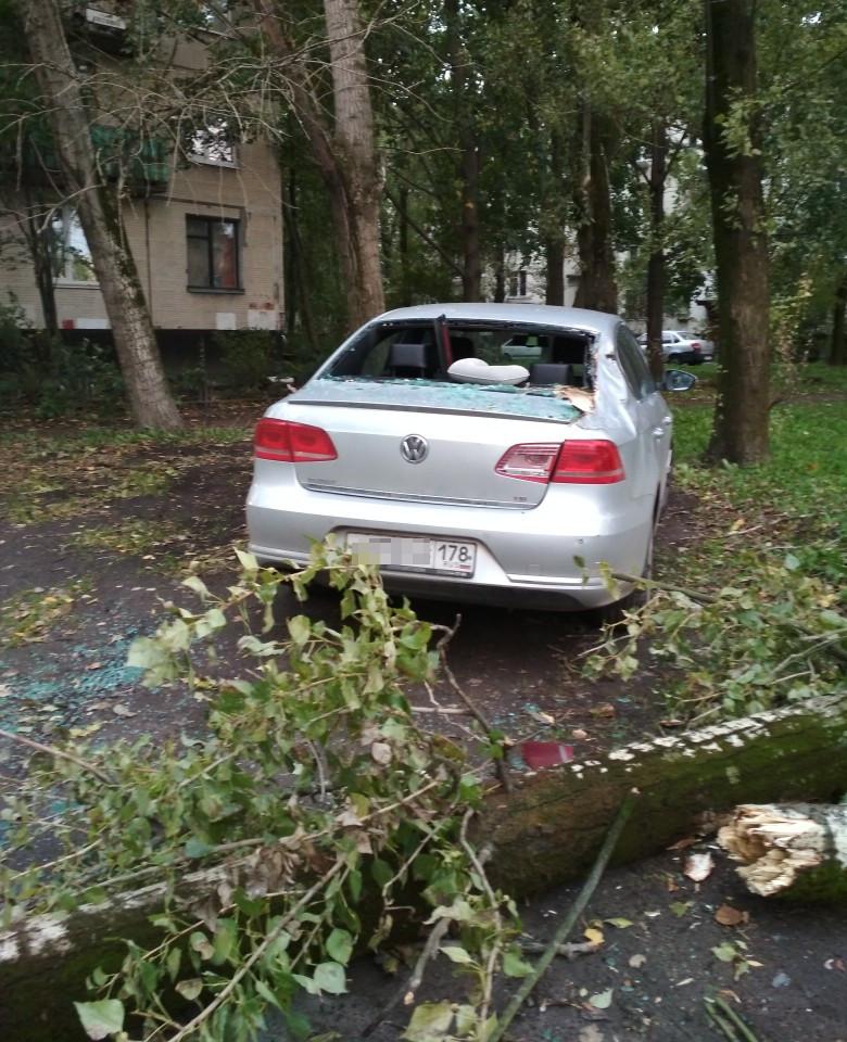 На улице Костюшко, во дворе дома 5, корпус 1, дерево упало на машину.