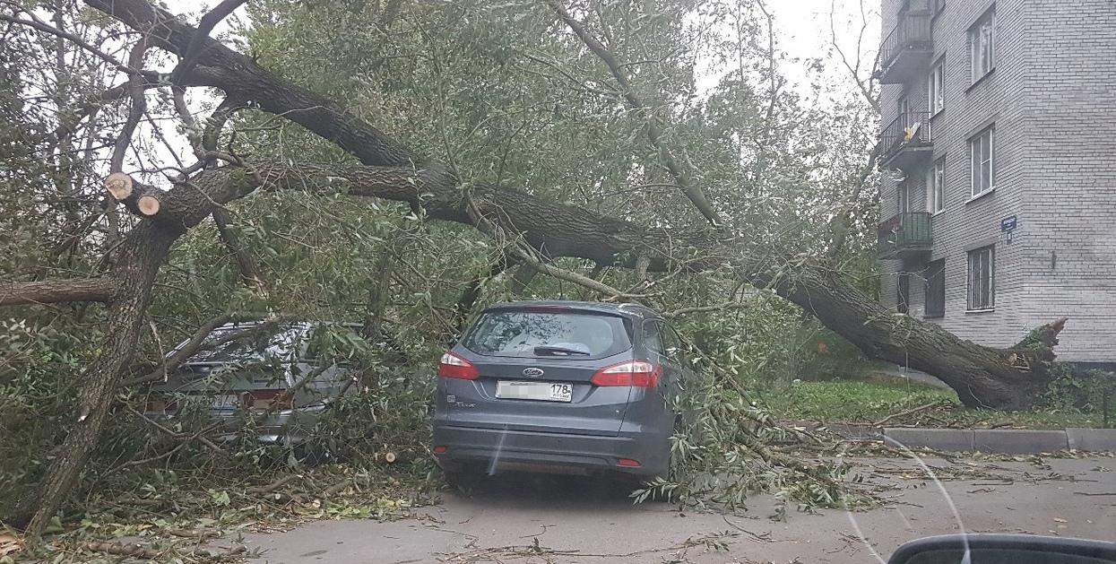 Во дворе дома 16, корпус 2, по Белградской улице дерево упало на «Форд Фокус» и «Ладу».