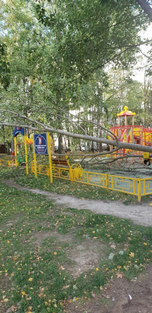 Во дворе дома 5, корпус 1, по улице Шостаковича дерево упало на детскую площадку.