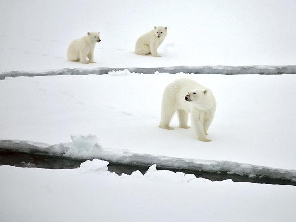 Освоение Арктики:  экологи боятся дизеля
