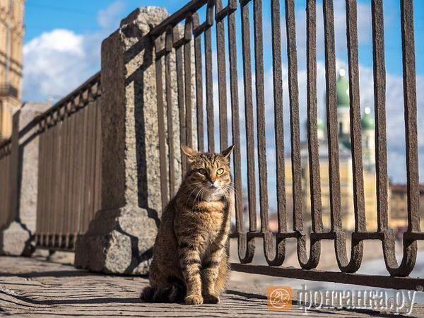 Как кот Сёма вскрыл зоозащитный андеграунд