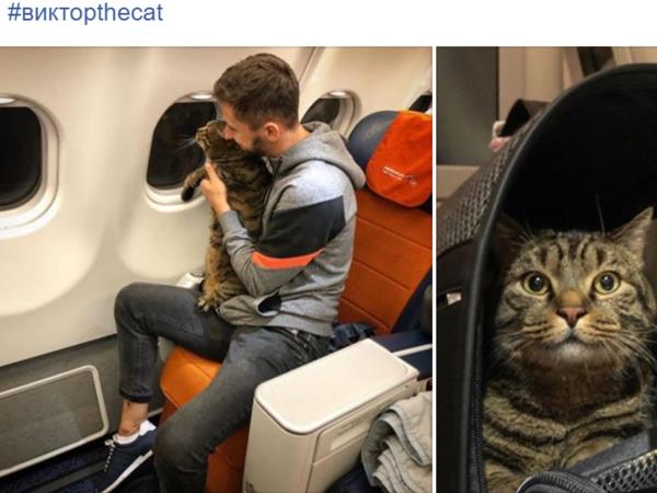 «Бро — не багаж», «Остановите, Вите надо выйти!» – Интернет мемами поддержал кота Виктора и его хозяина в споре с «Аэрофлотом»