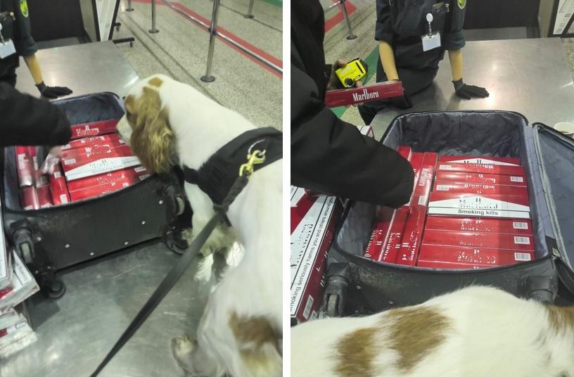 А ну-ка, убери свой чемоданчик. В Торфяновке поймали табачного контрабандиста с 8000 сигарет  (Иллюстрация 1 из 1) (Фото: пресс-служба Выборгской таможни)