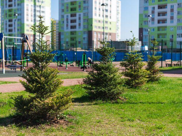 Построить дома и посадить деревья: как жители преображают «Янилу»