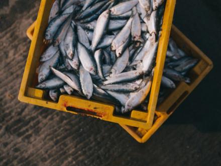 Вам прописали рыбную диету. Эксперты рыбной отрасли мечтают о льготах нефтяников
