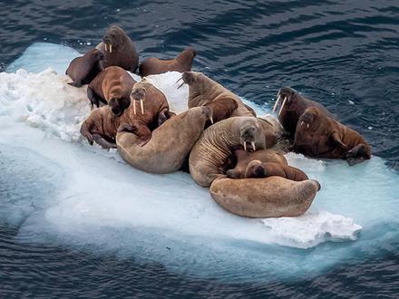 Победителей викторины «Что вы знаете об Арктике» ждут на арктической вечеринке