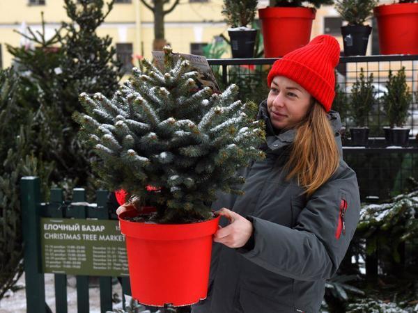 Где купить ёлку в Петербурге? Ищите в интерактивной карте «Фонтанки»